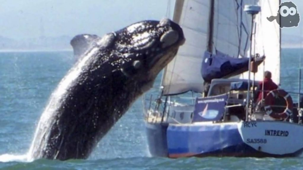 whale sailing superstitions